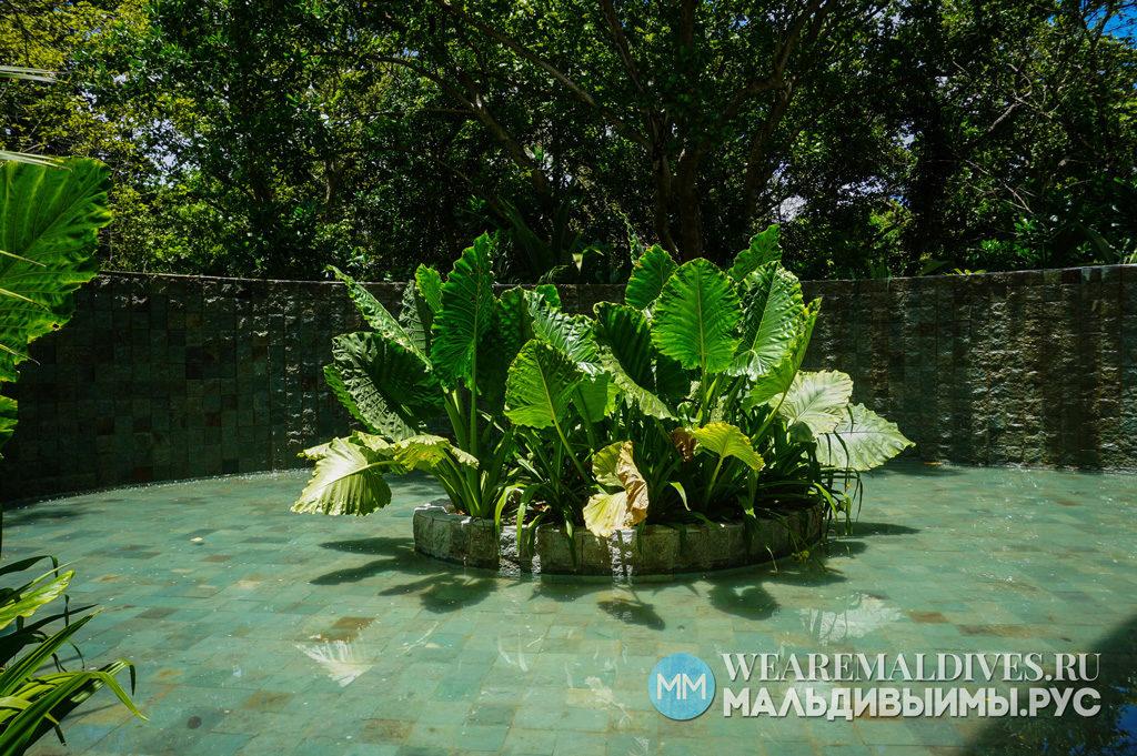 Большие листья зеленых растений во внутреннем дворике виллы Сонева Фуши